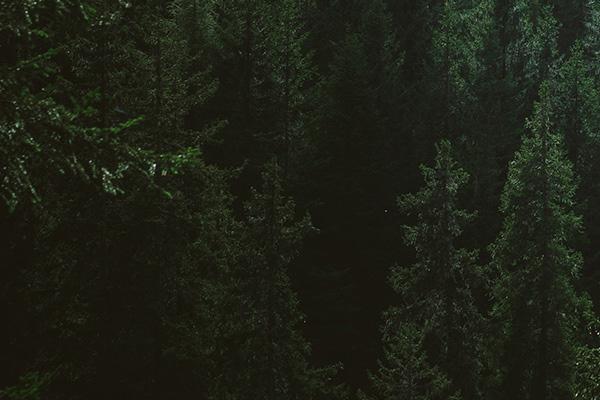 banner bomen