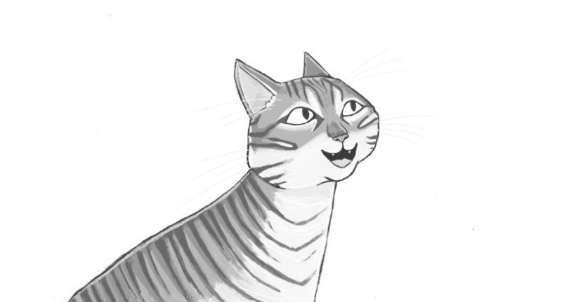 illustratie blije kat